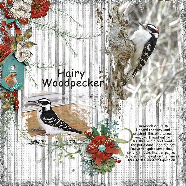 hairywoodpecker