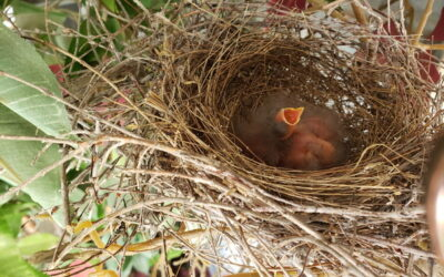 An Empty Nest … literally