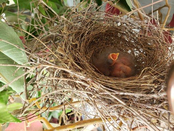 An Empty Nest … literally
