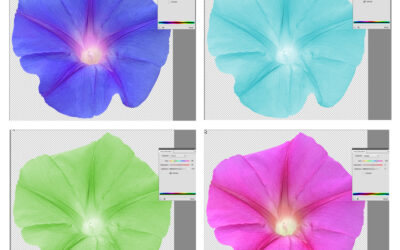 Recolor an Image in Photoshop with a Hue/Saturation Adjustment Layer